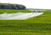 Послуги з авіахімобробки пшениці кукурузником